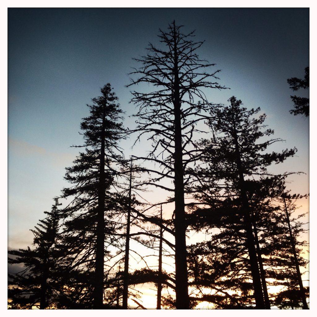 Trees, Oregon - copyright David Quitmeyer